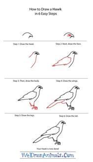 how to draw a hawk how to draw a hawk drawing pencil
