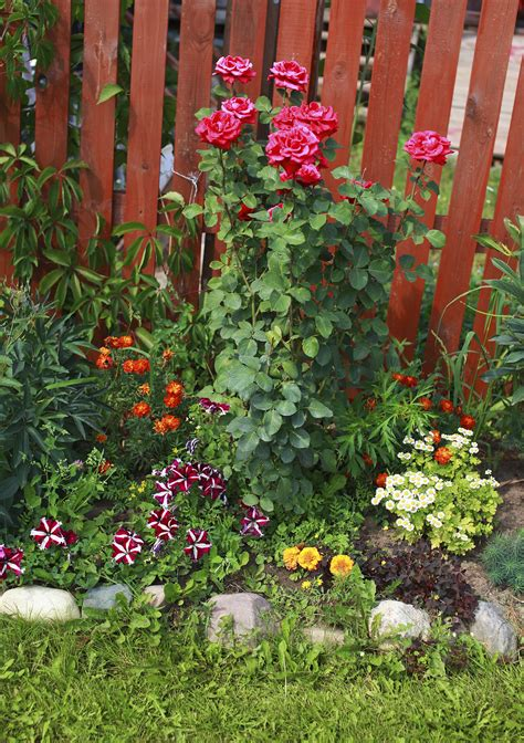 grow l for plants underplanting rose companions suggestions for plants