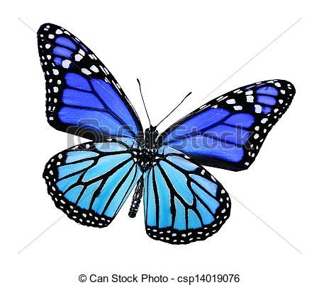 imagenes de mariposas azul turquesa stock de ilustraciones de azul mariposa turquesa