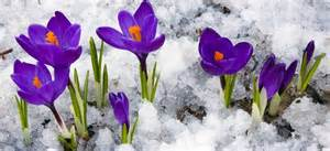 Flowers That Grow During Winter - 10 best garden plants to grow in the winter time pro