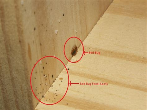 what to look for in a mattress 20 amazing ways to cleanse your home of bed bugs