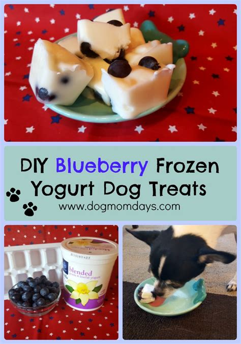 yogurt treats diy blueberry frozen yogurt treats days