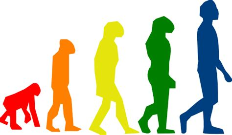 Evolution Clipart evolutions by faical 2 clip at clker vector clip royalty free domain