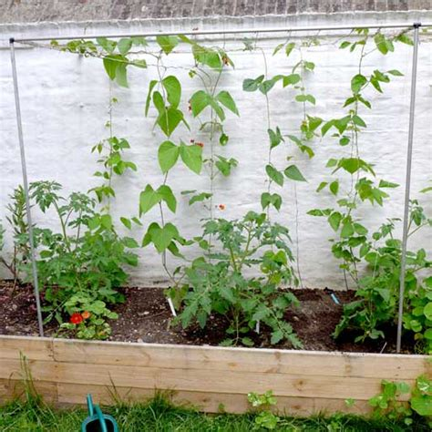 frame for climbing plants using a raised bed 183 diary of a brussels kitchen garden
