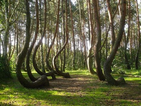 crooked forest poland philosophy of science portal a polish anomaly the