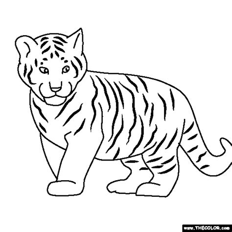Coloring Pages Of Baby Tigers by Baby Tiger Coloring Page For Lyric Baby