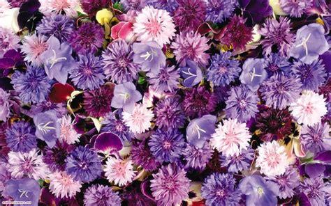 fiori hd scarica sfondi fiori bouquet sfondi hd per desktop