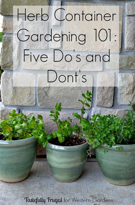 25 best ideas about potted herb gardens on pinterest 5 dos and don ts for planting herbs western garden centers