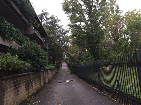 municipio di ufficio anagrafe maltempo a roma albero crolla nel cortile dell ufficio