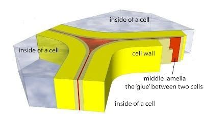 which plant cell organelle uses light energy to produce sugar chapter 2 cells flashcards easy notecards
