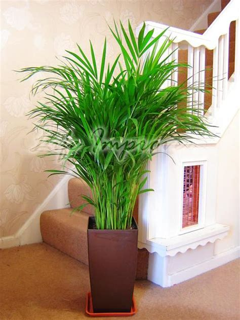 green home decor that cleans the air top eco friendly house plants