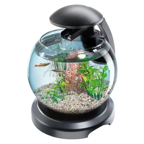 Tetra Betta By Iwak Ku Aquarium aquariumkugel f 252 r kffisch oder karausche 6 8 l abc zoo