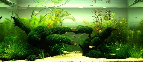 small aquarium aquascape bubbles aquarium aquascapes tank setups projects