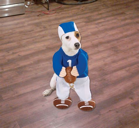 puppy football football player costume