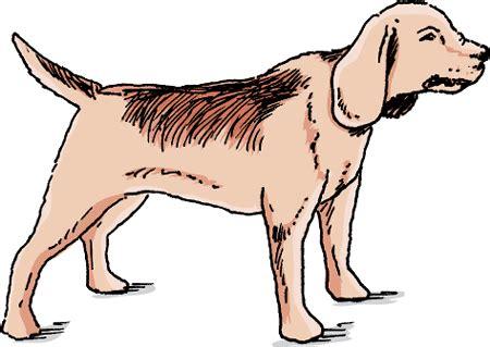 tetanus in dogs tetanus in dogs owners merck veterinary manual