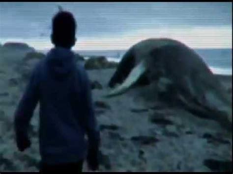 imagenes y videos reales de sirenas sirenas el descubrimiento trailer youtube