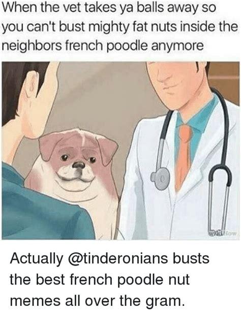Bust A Nut Meme - 25 best memes about nuts meme nuts memes