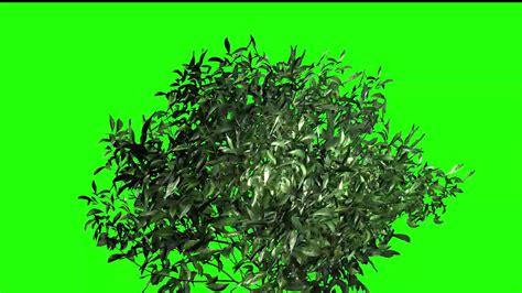 best for green screen plants green screen best tree green screen footage