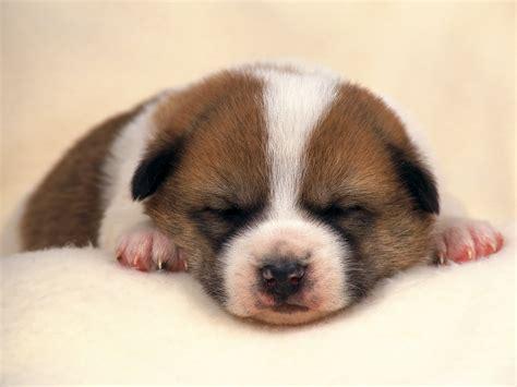 imagenes de animales tiernos para descargar bonitas mascotas tiernas con textos para compartir por