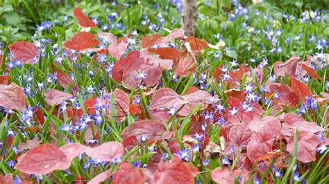Schattenpflanzen Garten Winterhart
