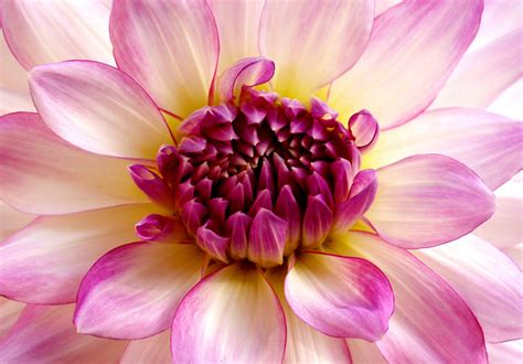 most beautiful flowers around the world the most beautiful flower in the world i m opinionated