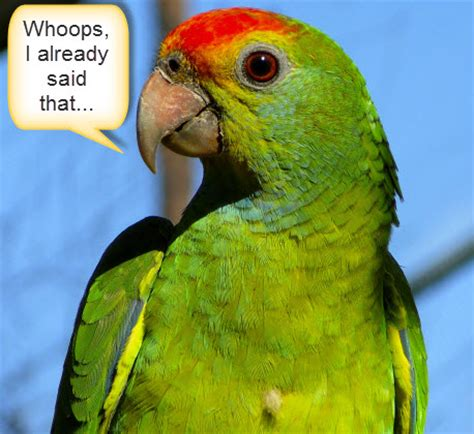 Parrot L by Why Your Brand Sounds Like A Parrot On Social Media