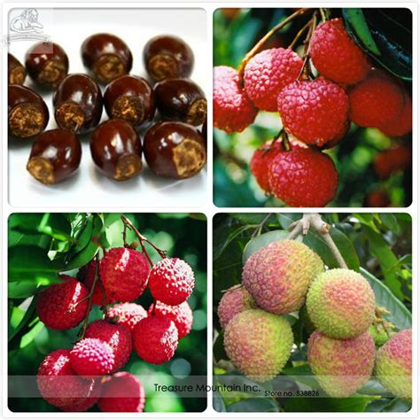 picture of lychee fruit savingourboys info