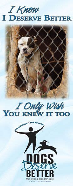 dogs deserve better dogs deserve better no chained dogs this is such a problem i that in my