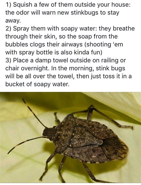 how to get rid of bugs in house plants 1000 images about diy pest control on pinterest posts cas and the o jays