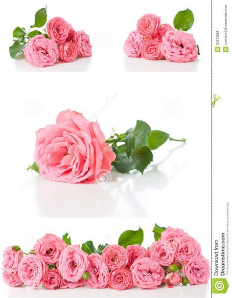 imagenes rosas brillantes flores brillantes 3d car interior design