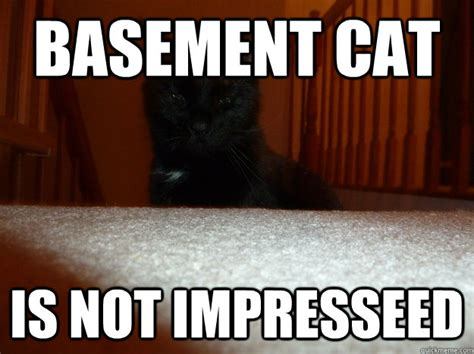 Basement Dweller Meme - basement cat meme memes