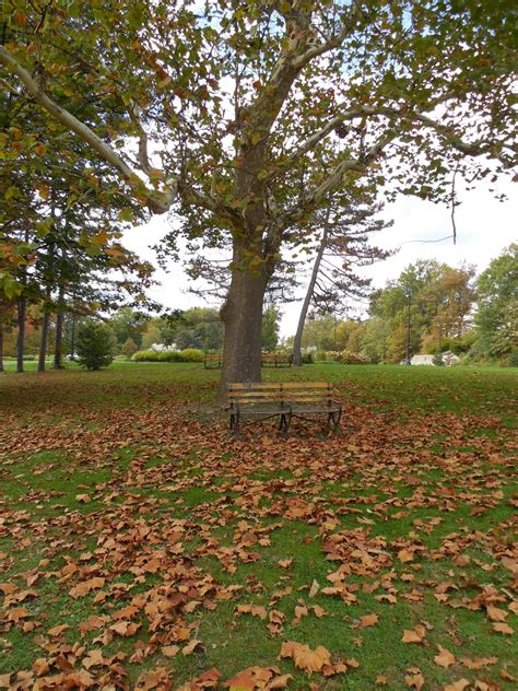 fall bench fall bench free stock photo public domain pictures