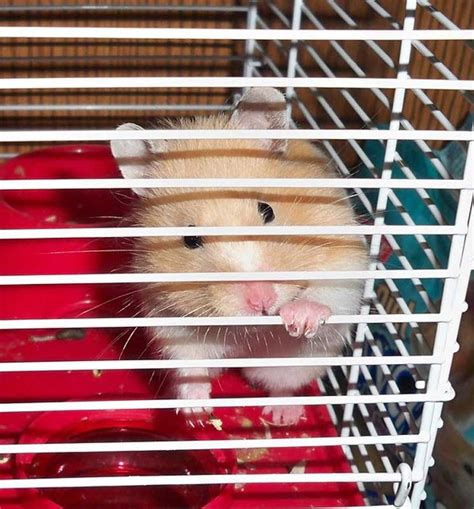 best cage best hamster cages of 2017 review