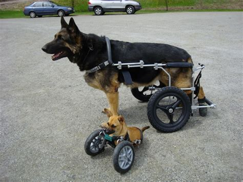 wheelchairs for dogs cost of a wheelchair cart quality of priceless joyful paws