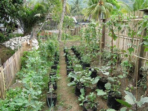 budidaya  agronimis pertanian optimalisasi pemanfaatan