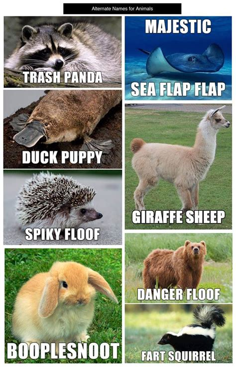 Animals Meme - just because why not these are pretty ridiculous and