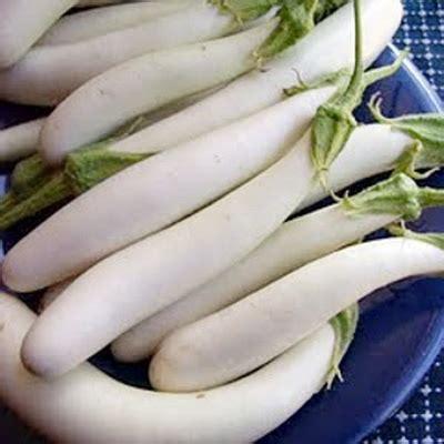 Benih Terong Viola jual biji terong putih jual biji tanaman tamanbenih