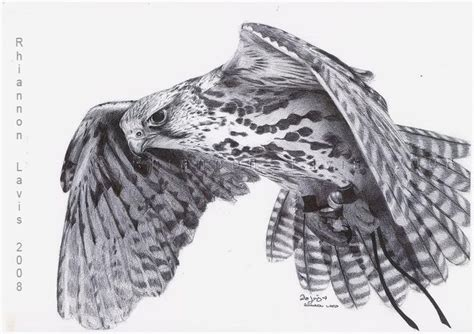 40 best images about falcons nest on pinterest atlanta falcons football wall and blog 40 best images about falcon tattoos on pinterest