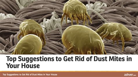 How To Get Rid Of Dust Mites In Your Mattress by Top Suggestions To Get Rid Of Dust Mites In Your House Doovi