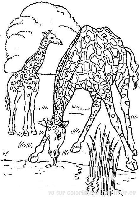 dessin à colorier de girafe