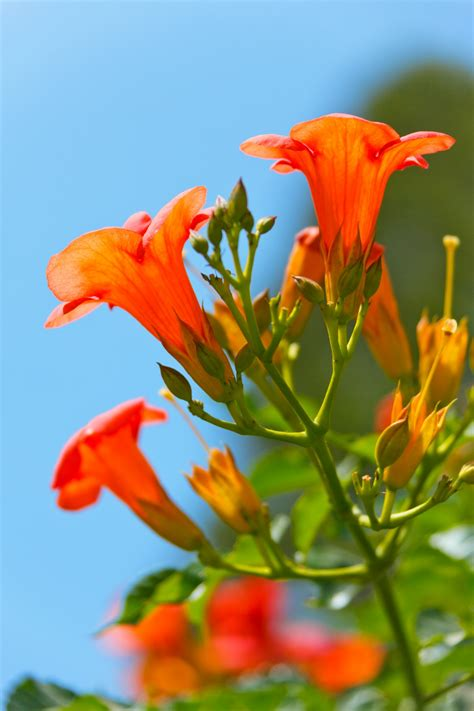 beautiful orange beautiful orange flower free stock photo public domain