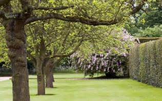 desktop wallpaper of trees and blossom at hardwick hall