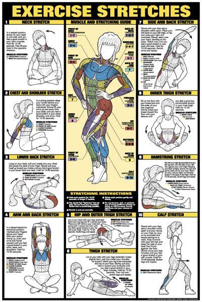 leg workout diagram leg workout chart chart series ii exercise exersice
