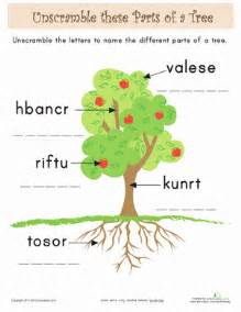 parts of a tree for kids worksheet education com