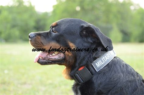rottweiler obedience classes collar with patches and release buckle