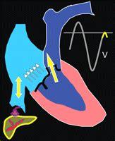 pattern of blood flow quizlet hepatic venous flow patterns flashcards quizlet