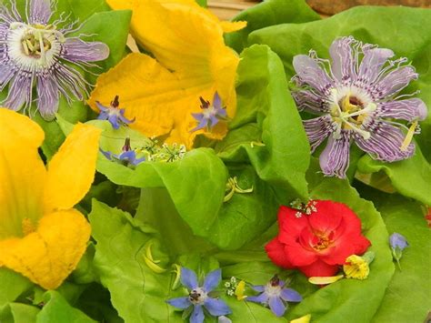 Edible Garden Flowers Grow Edible Flowers Garden Org