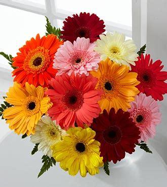 thinkin of home gerber daisy love romantic flowers gerbera daisy flower