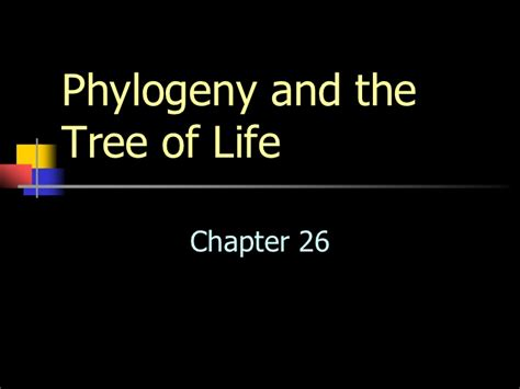 what do trees represent chapter 26 phylogeny and the tree of life ppt video chapter 26 phylogeny and the tree of life