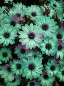flower colors flowers flowers photo 33623855 fanpop